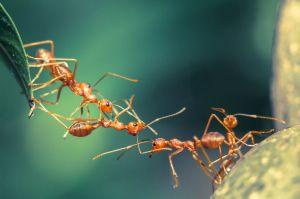 le-venin-fourmis-contre-psoriasis_width1024
