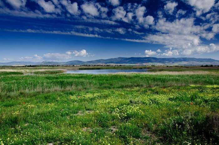 bf82f1a891_79548_las-tablas-de-daimiel-grassland